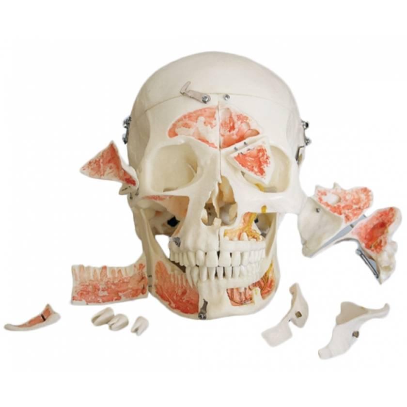 Demo Skull - 14 Part