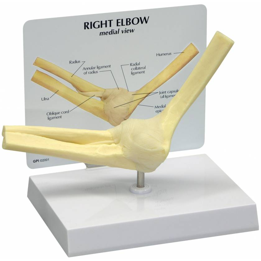 Basic Right Elbow Join Model (Rigid)