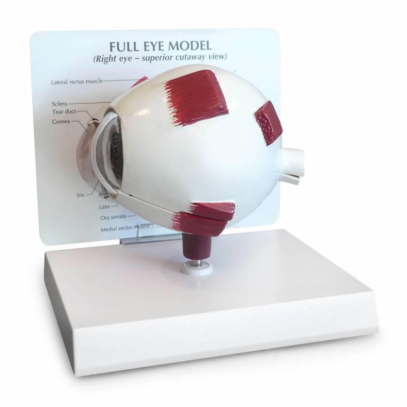 Full Eye – Model #2751