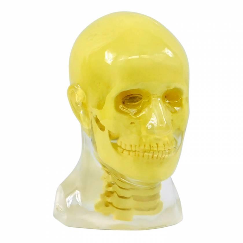 RS-108T Transparent Head Phantom With Cervical Spine