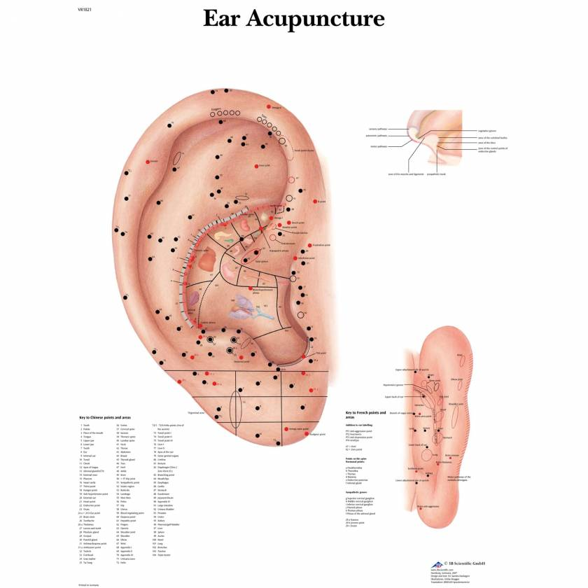 Ear Acupuncture Chart