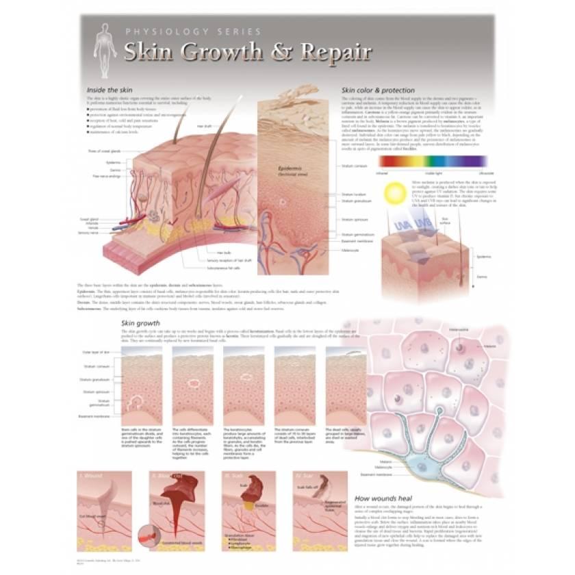 Skin Growth & Repair Laminated
