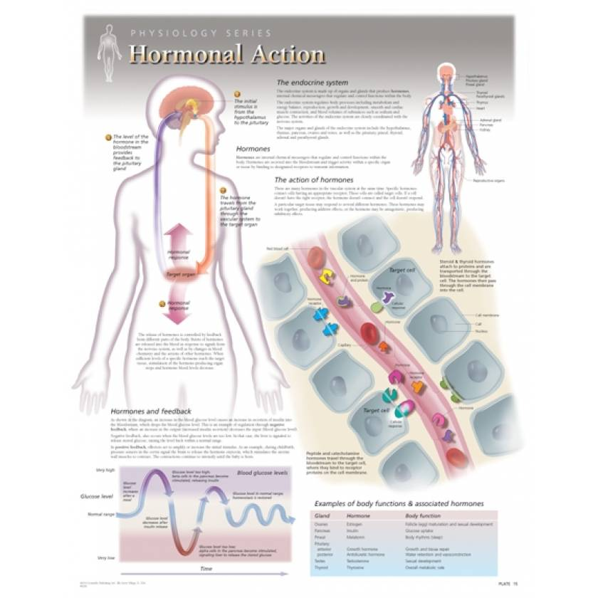 Hormonal Action Laminated