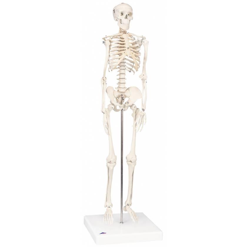 Mini Skeleton - Mounted on Base