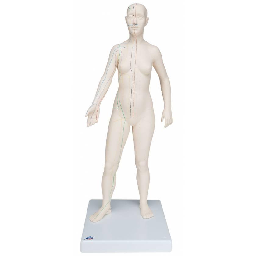 Acupuncture Model - Female
