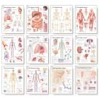 The Complete Body System Chart Set